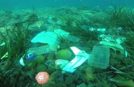 Plastics vervuilen de wereldzeeën