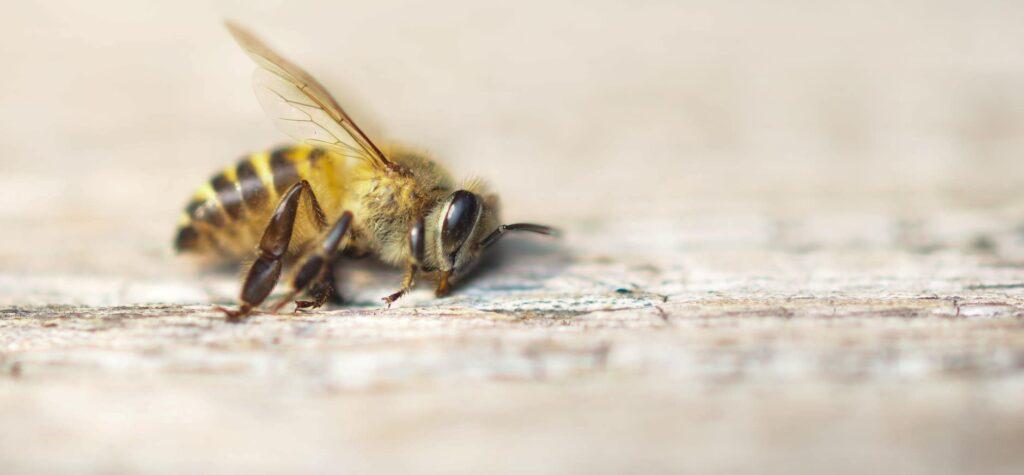 De Insecten App