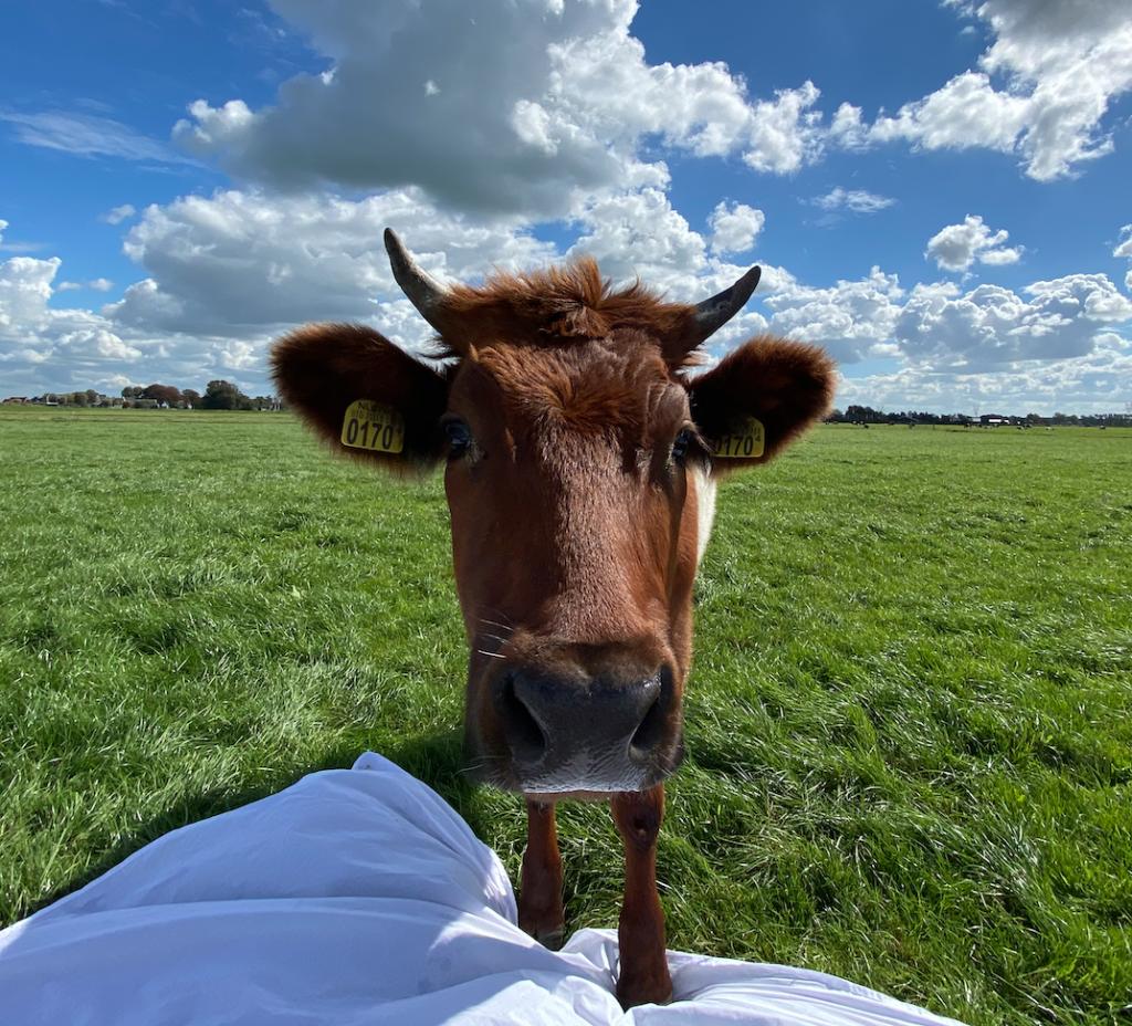 De Sensory Experience van Kweekvlees