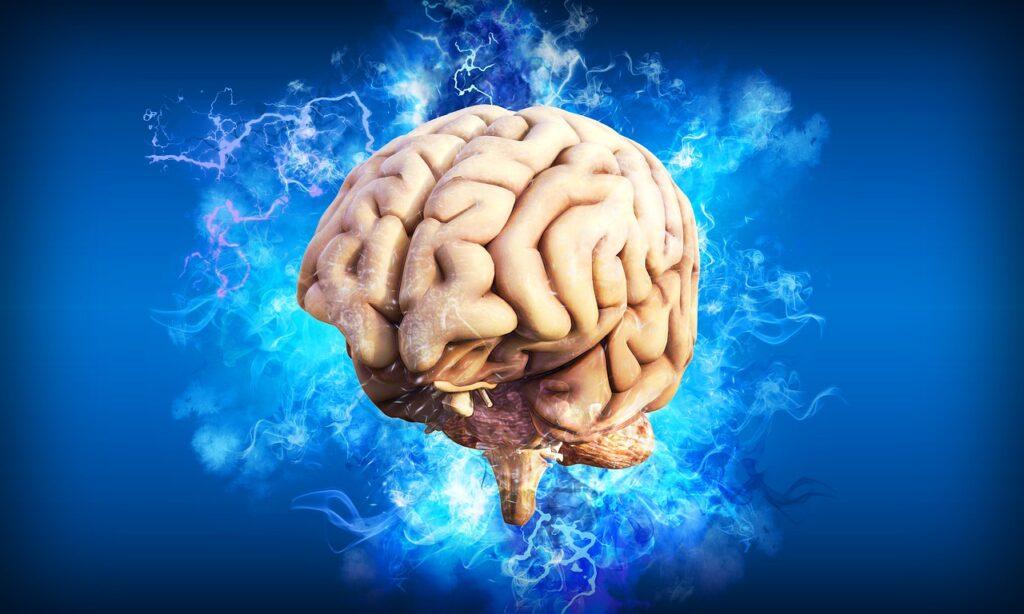 De Hersenen van Corpus
