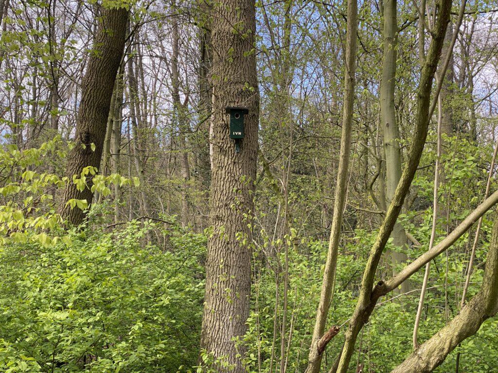 Biodiversiteit in het Kralingse Bos